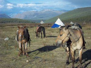 Horses at rest.