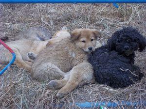 Puppy pile.