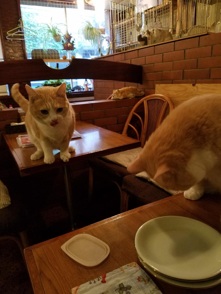 Pub Cats - Two Second Street - www.twosecondstreet.com