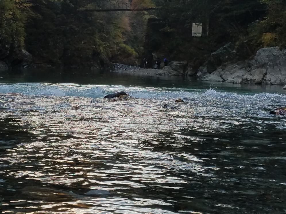 Hikawa Gorge River - Two Second Street - www.twosecondstreet.com