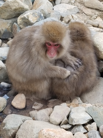 Jigokudani Snow Monkey Park - Two Second Street - www.twosecondstreet.com