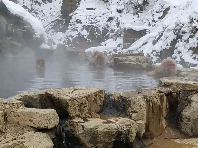 Snow Monkey Hotspring - Two Second Street - www.twosecondstreet.com