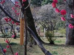 Kagoshima Plum Blossoms - Two Second Street - www.twosecondstreet.com