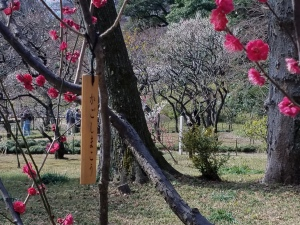 Kagoshima Plum Blossoms - Two Second Street - www.twosecondstreet.com