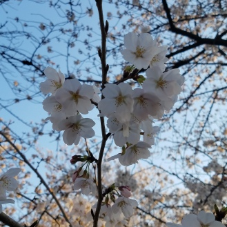 Hanami View - Two Second Street - www.twosecondstreet.com