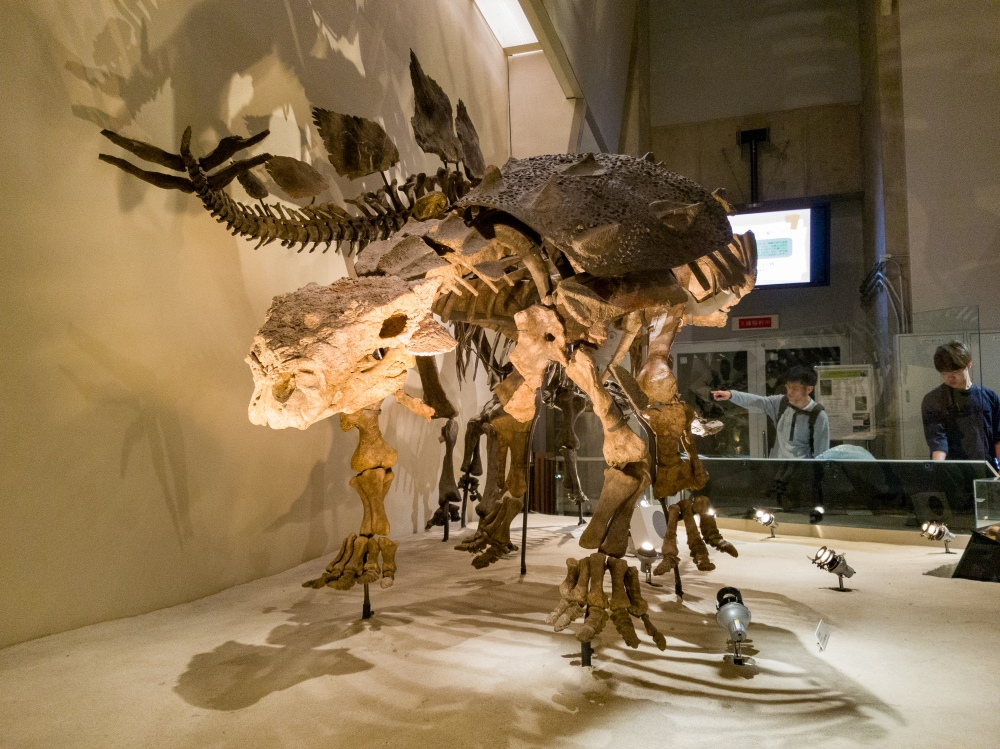 Ankylosaurus - Two Second Street - www.twosecondstreet.com